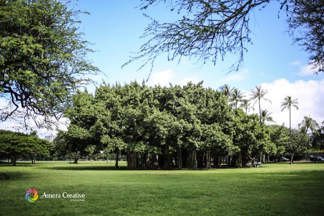 大きなガジュマルの木 #1 @ Kapiolani Park