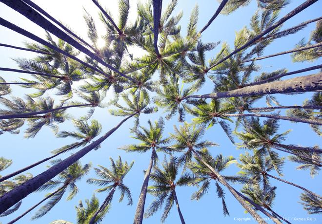 アラモアナビーチ  #02