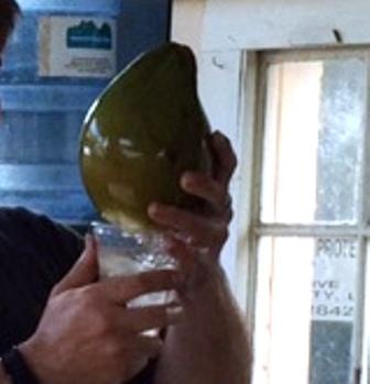 coconuts7