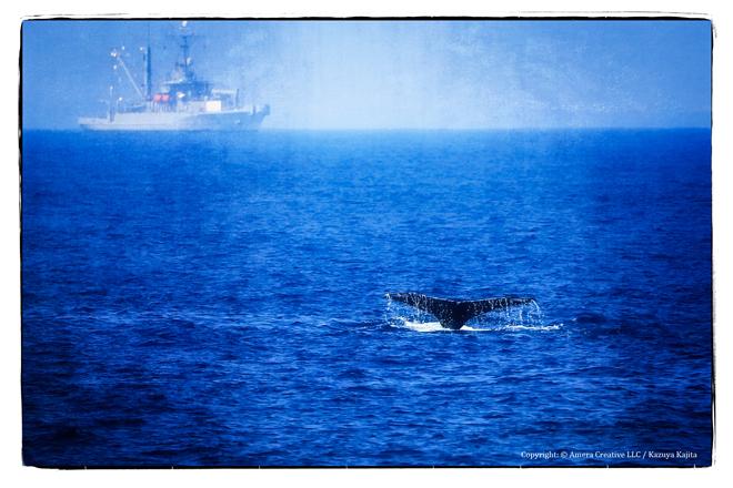 ホノルル沖 #1