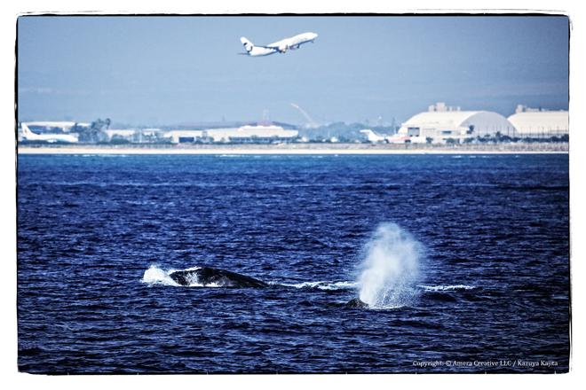 ホノルル沖 #2