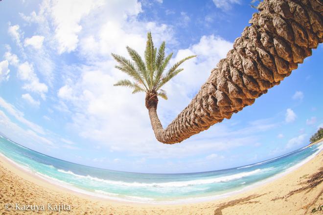 椰子の木 5 @ Sunset Beach